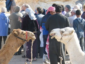 camels talking